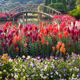 Timbres      du thème Jardins   '