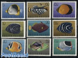 Tropical fish 9v