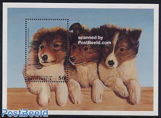 Shetland sheepdog s/s